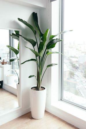 pohon indoor
