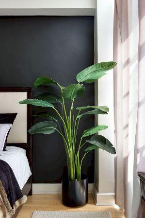 pohon unik kamar
