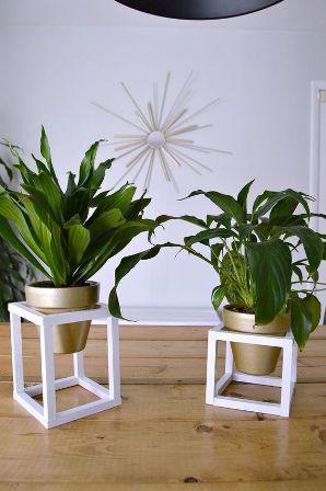 tanaman hias kamar